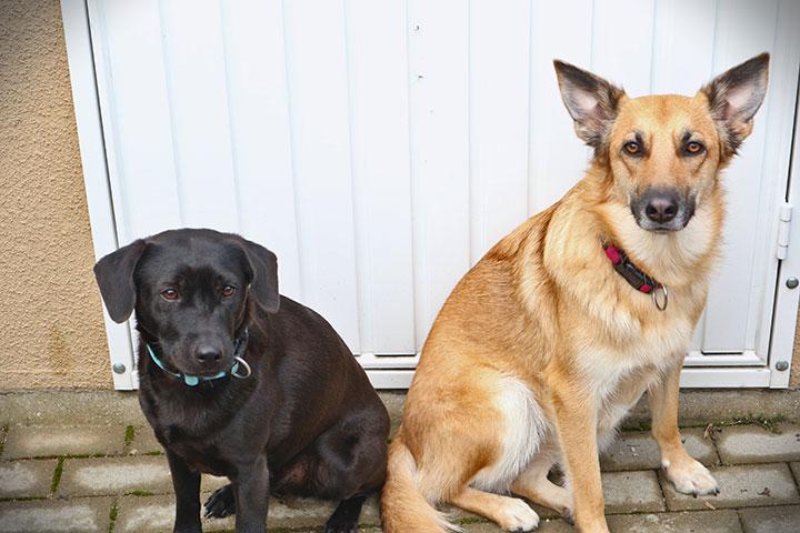 Buddy und Luna