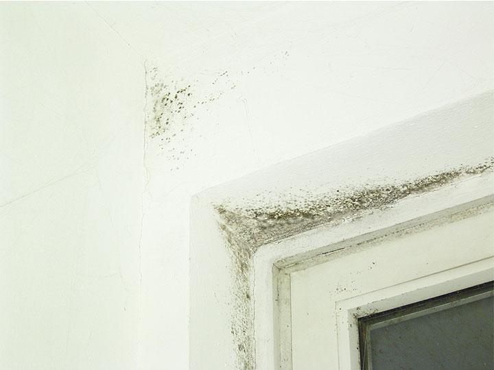 tschischka bautenschutz feuchte w nde und schimmel bek mpfung. Black Bedroom Furniture Sets. Home Design Ideas
